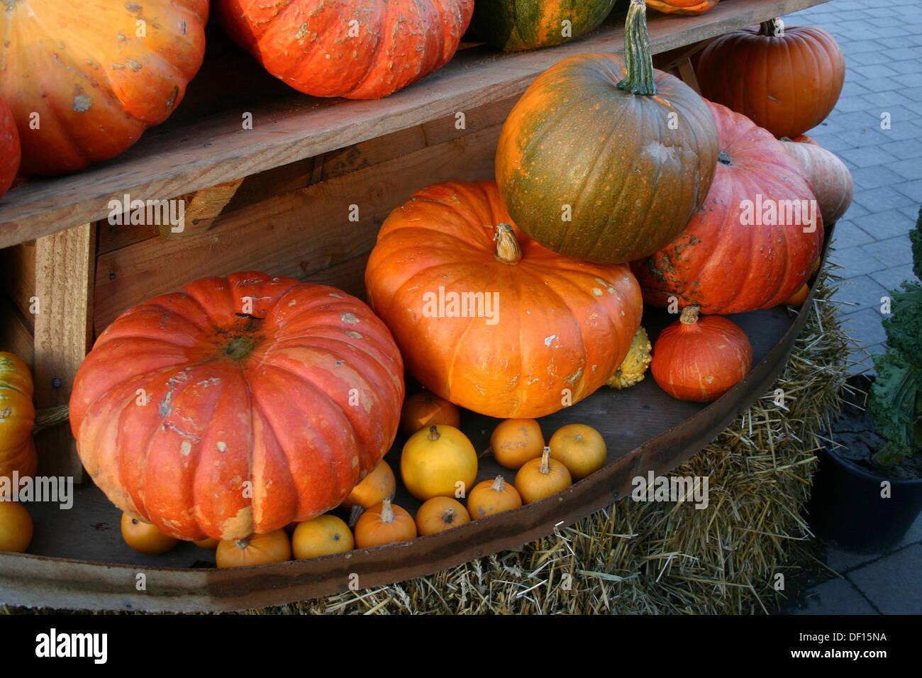 Neustadt in Holstein, Germany, Kiosk with pumpkins Stock Photo