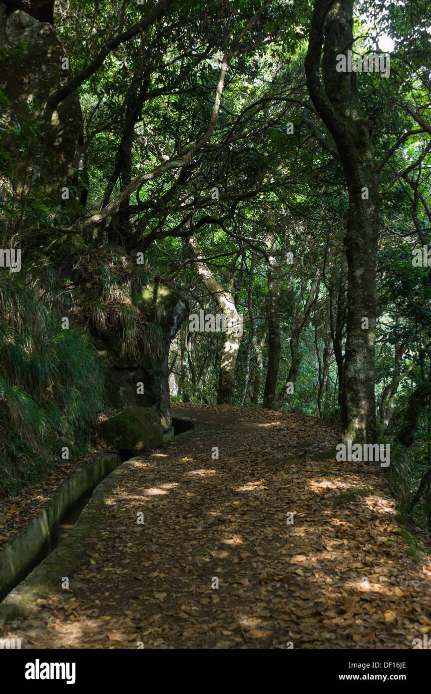 Shady path of the levada of Serra do Faial, between Ribeiro Frio and the Balcões belvedere, Madeira, Portugal Stock Photo