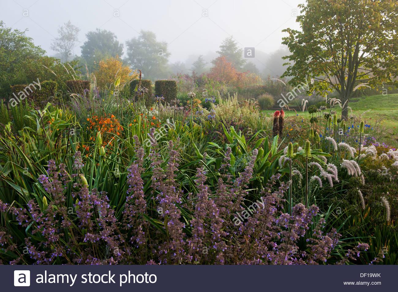 Nepeta Upright form Pennisetum villosum Heuchera villosa Autumn Bride Tulbaghia Hazel autumn fall borders perennials - Stock Image