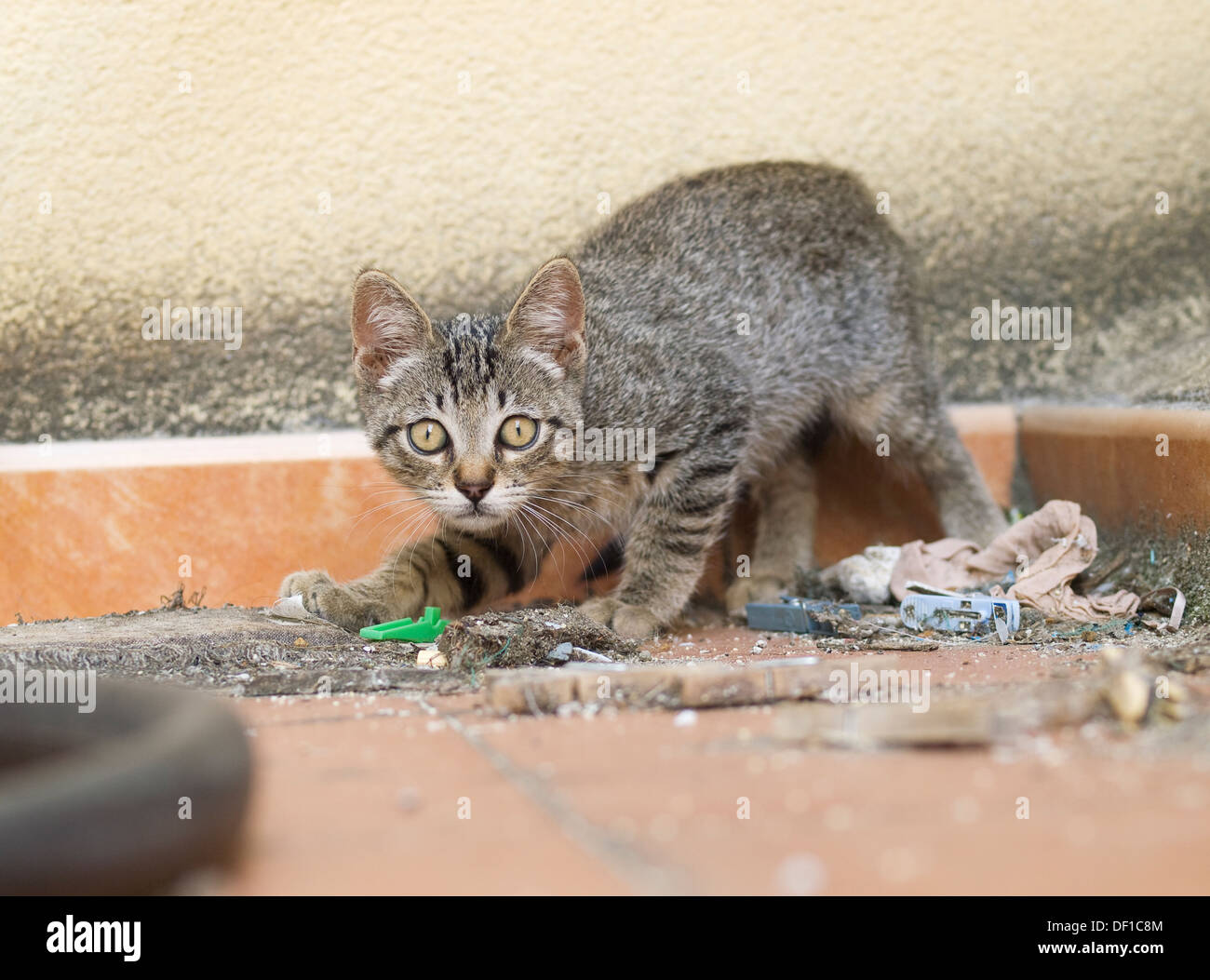 Street Kitten. The kitten is in attack position - Stock Image