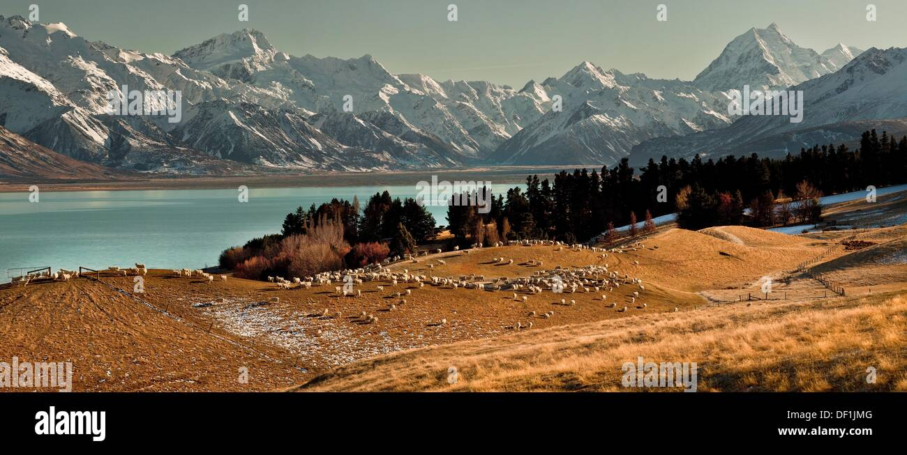 High country sheep station above Lake Pukaki, Mt Sefton left and Aoraki / Mt Cook, winter, Canterbury, New Zealand. - Stock Image