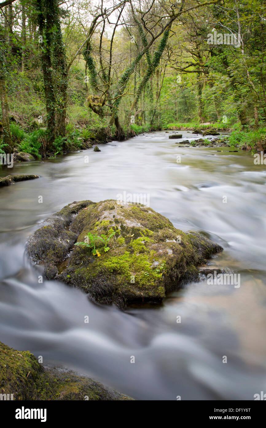 Stara Woods; Cornwall; UK; Shutter Speed 4 - Stock Image