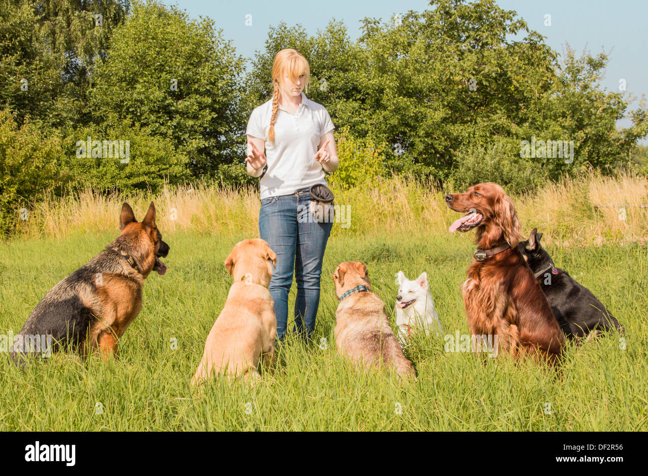 A group of dogs listen to the commands of the dog trainer - Stock Image