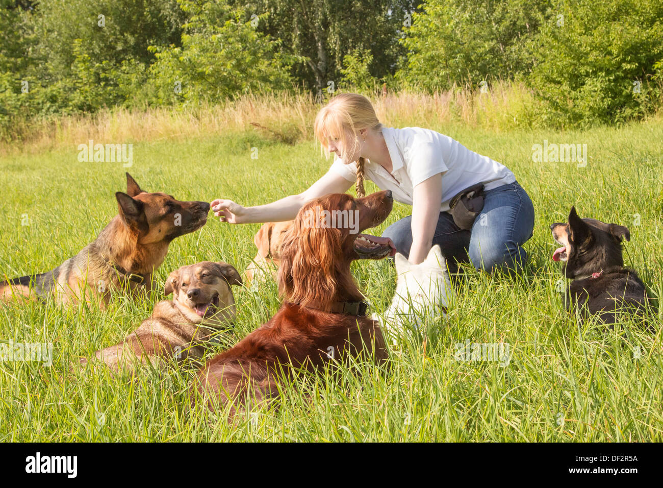 Female dog trainer feeds a dog with goodies after training - Stock Image
