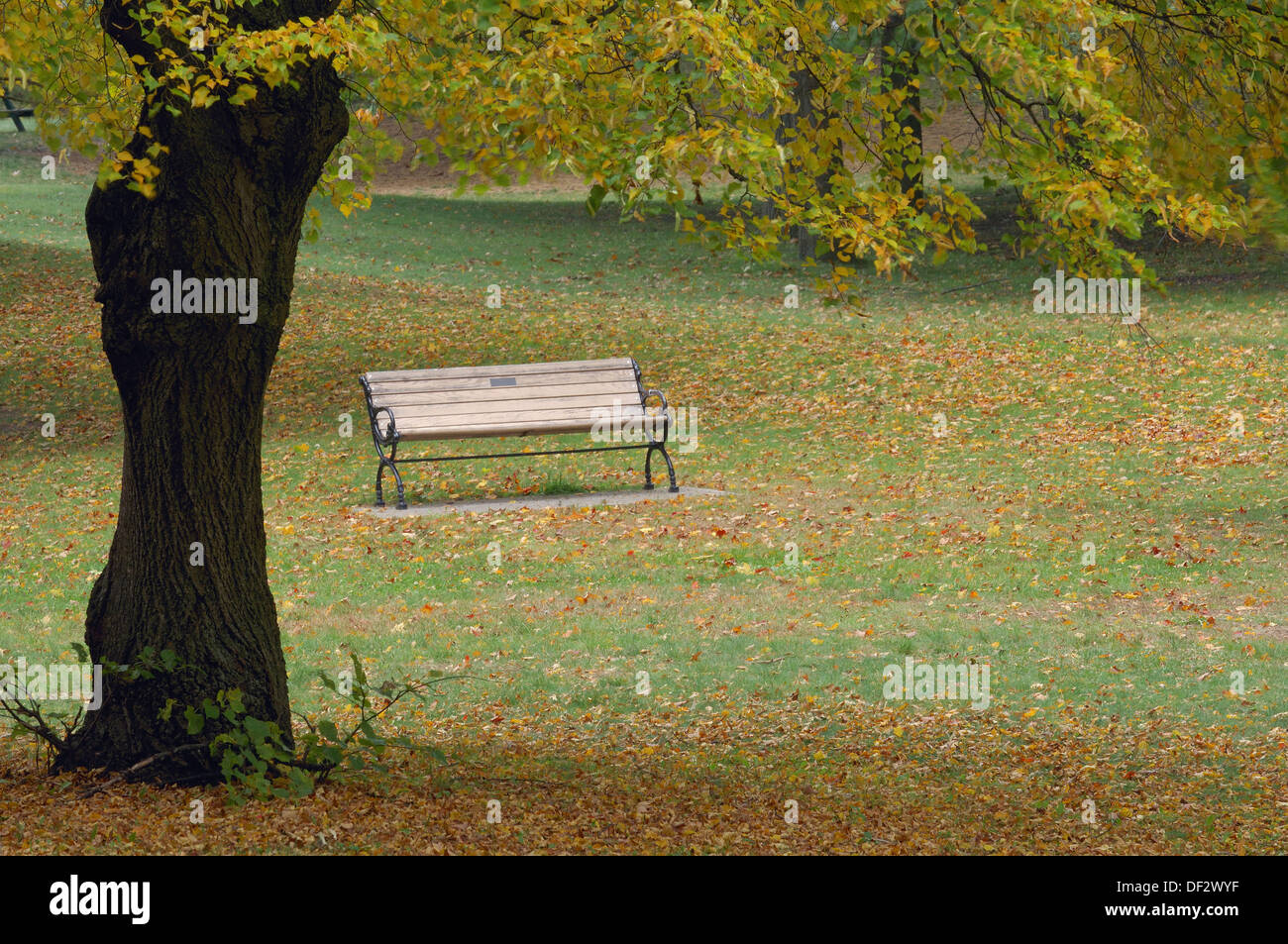 Bench In Park At Autumn High Park Toronto Ontario Canada America