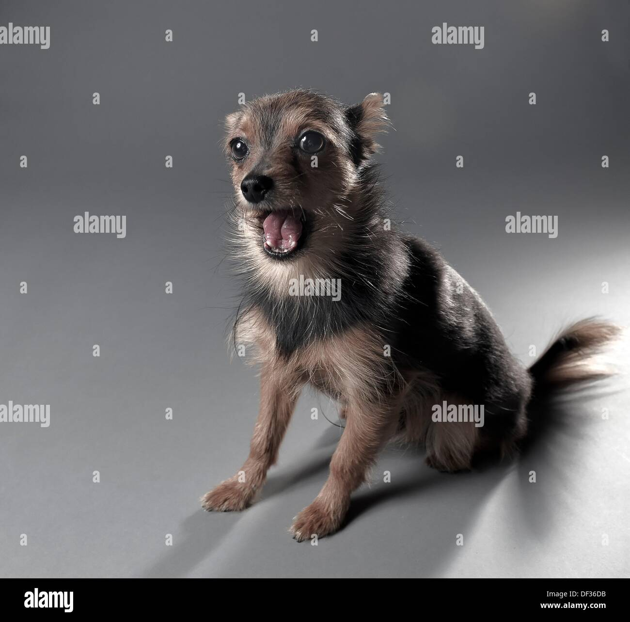Silly Looking Dog Making A Funny Face Stock Photo 60921879 Alamy