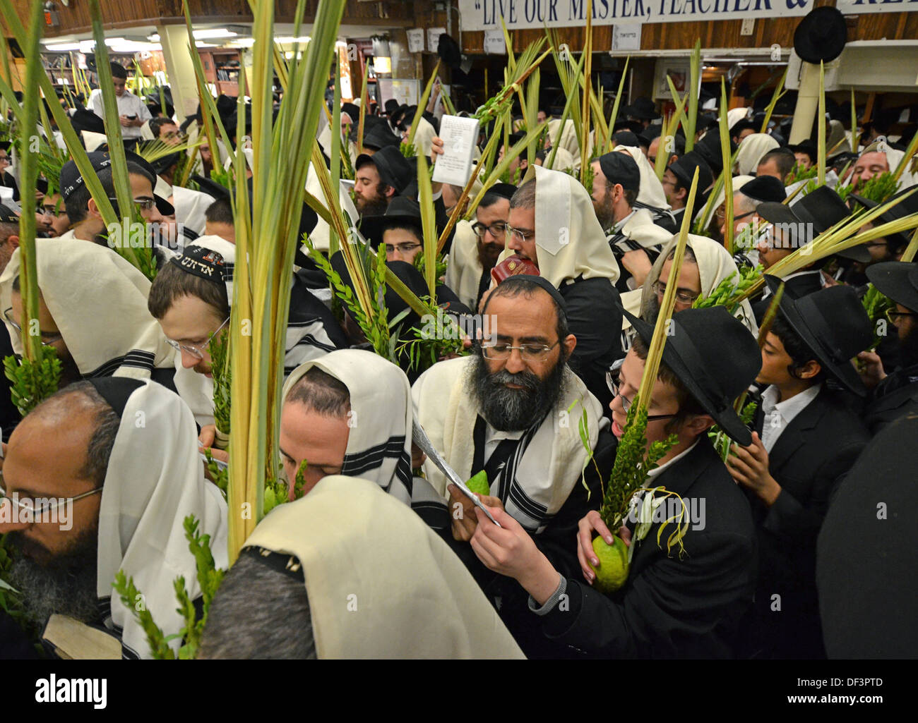 Sukkot morning services at Lubavitch headquarters in Brooklyn where worshipers carry an esrog and lulav and circle the podium. - Stock Image