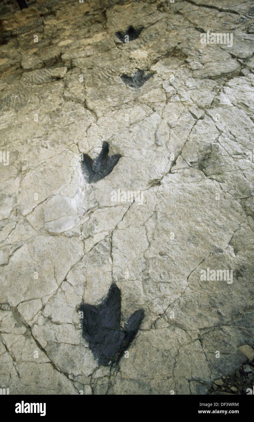 Dinosaur footprints. La Rioja, Spain - Stock Image