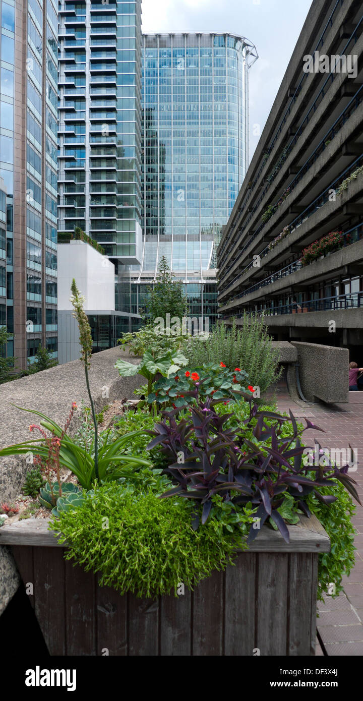 Wooden box planter container with garden plants at the Barbican Estate surrounded by office buildings & Citypoint London England UK  KATHY DEWITT - Stock Image