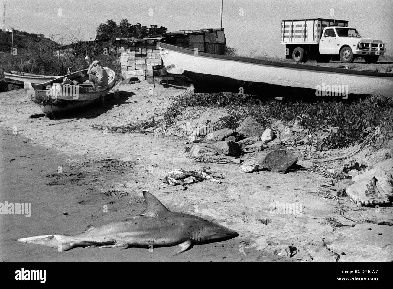 Shark beached washed up and dead Mazatlan Mexico 1973.  1970s HOMER SYKES - Stock Image