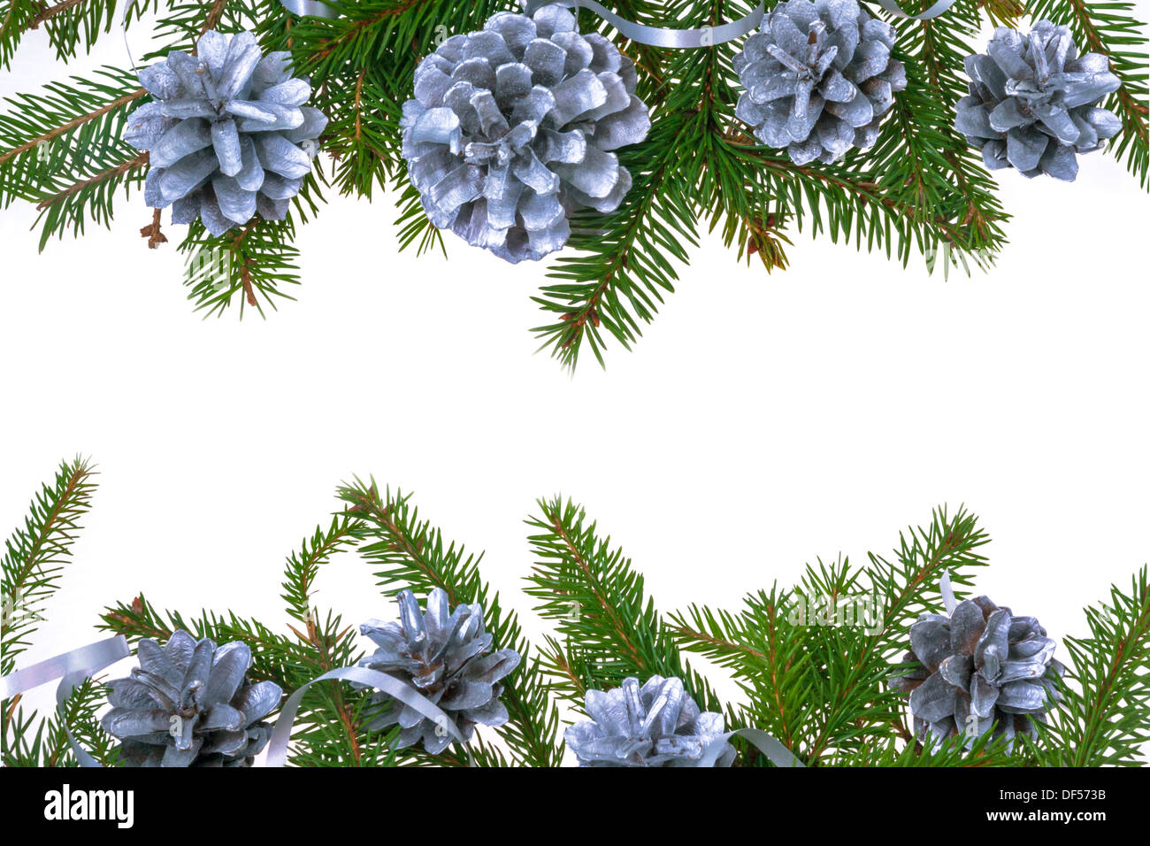 Christmas Decorations Background With Pines And Green Spruce