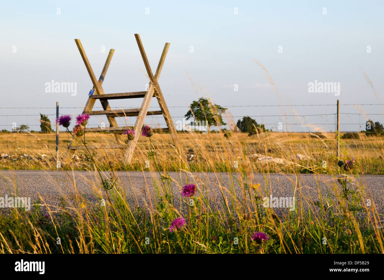 Stile over barb wire with flowers in foreground - Stock Image