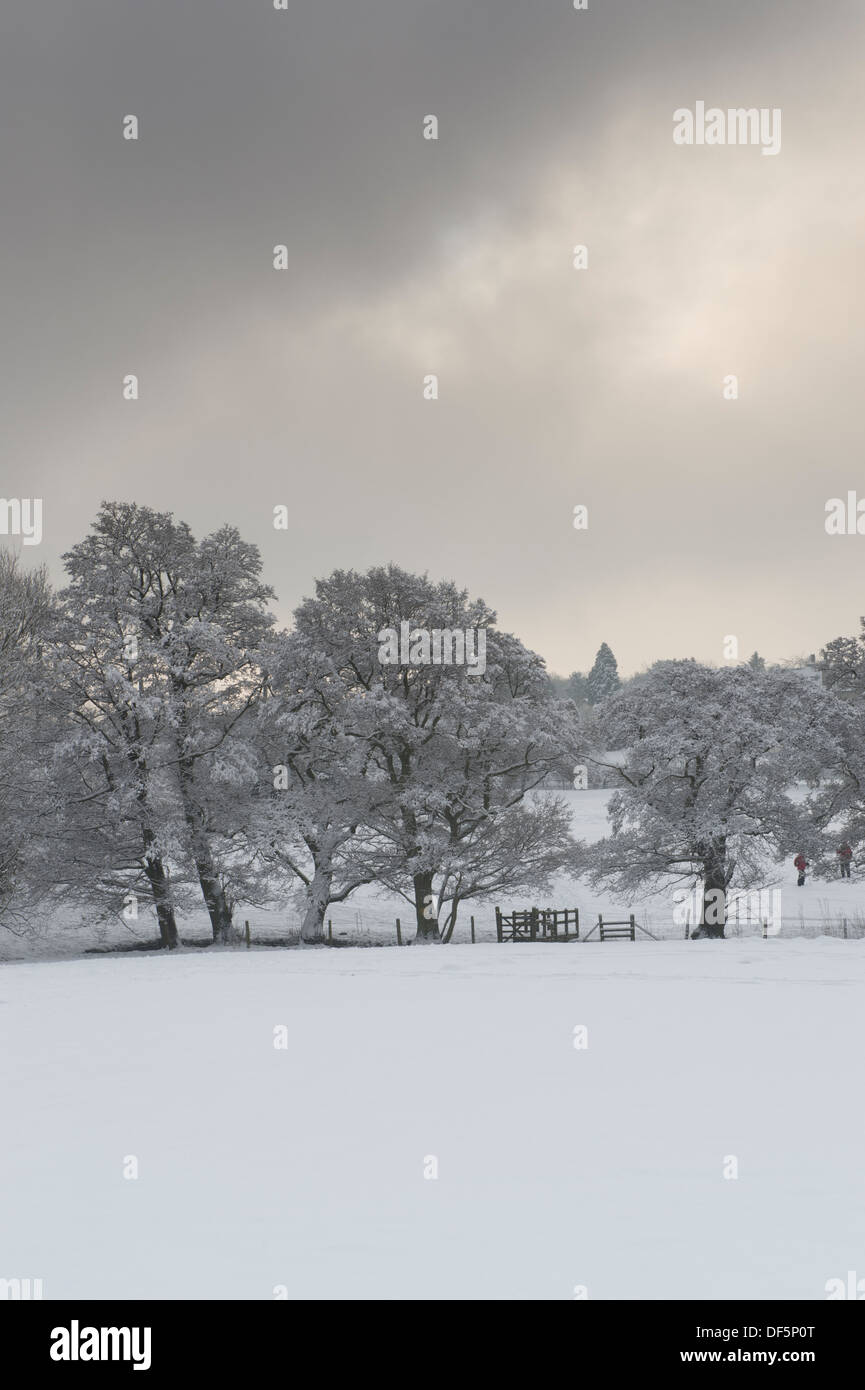 Winter scene in scenic countryside with line of bare trees & wooden bridge in snow-covered field under dark grey sky - West Yorkshire, England, UK. - Stock Image