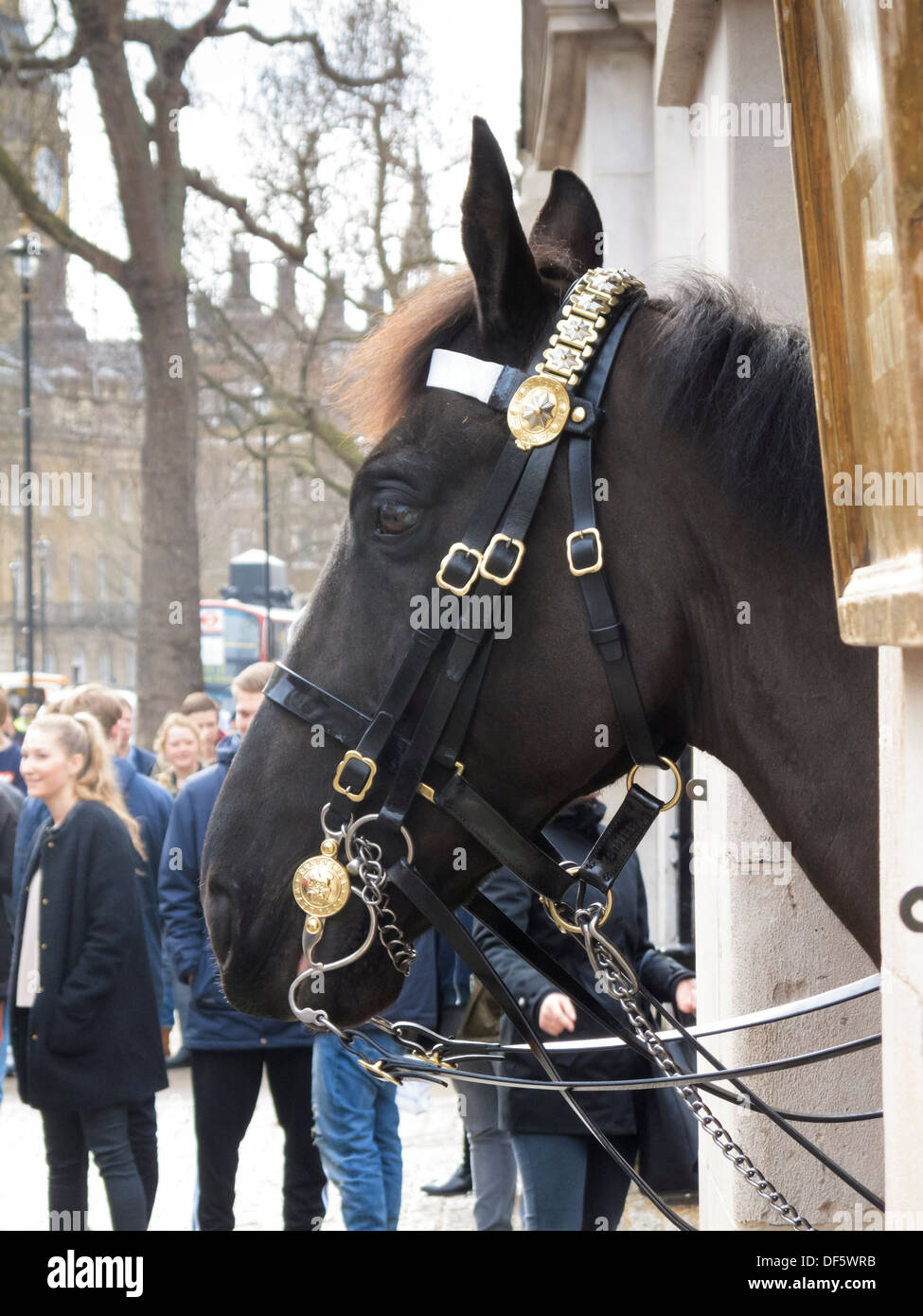 Queens Royal Horseguards Lifeguard Cavalry Horseguards Parade Whitehall London England Stock Photo