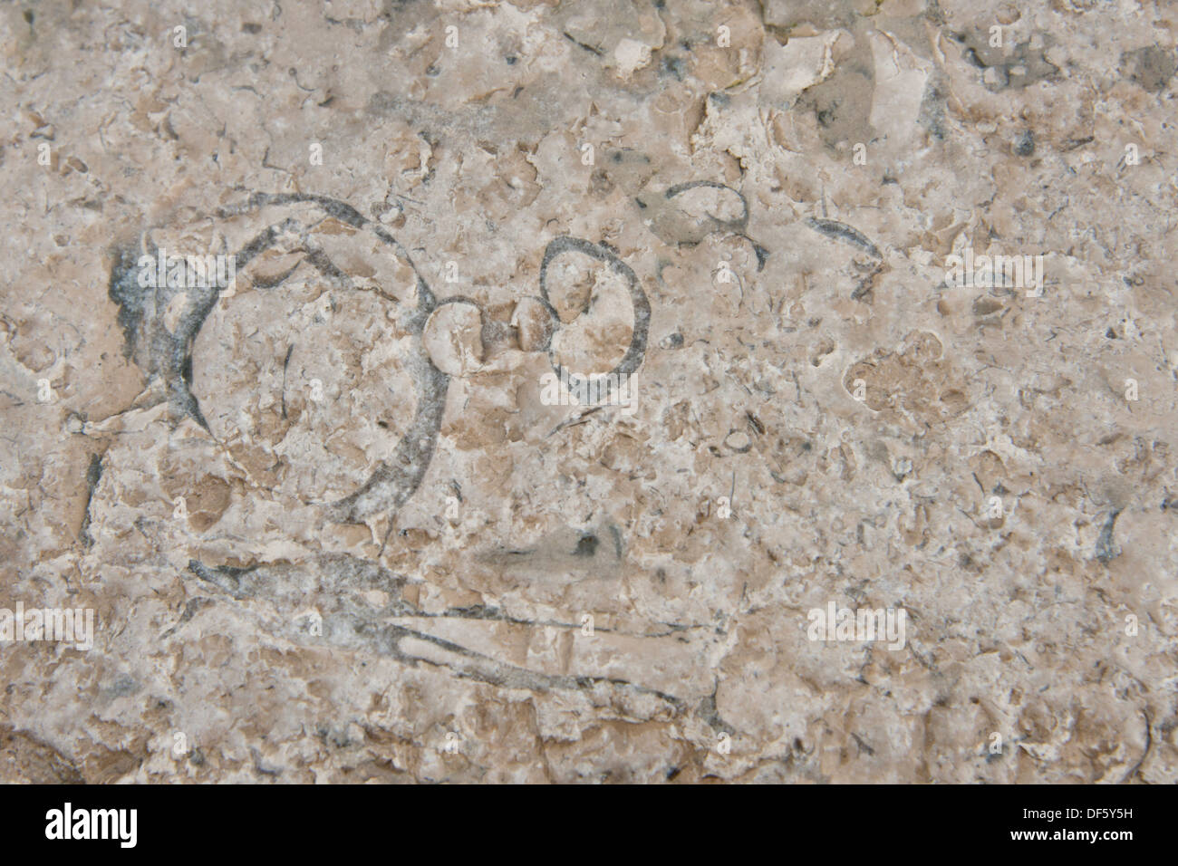 Canada, Arctic Archipelago, Nunavut, Akpatok Island, Qikiqtaaluk Region. Impression of prehistoric fossils. - Stock Image