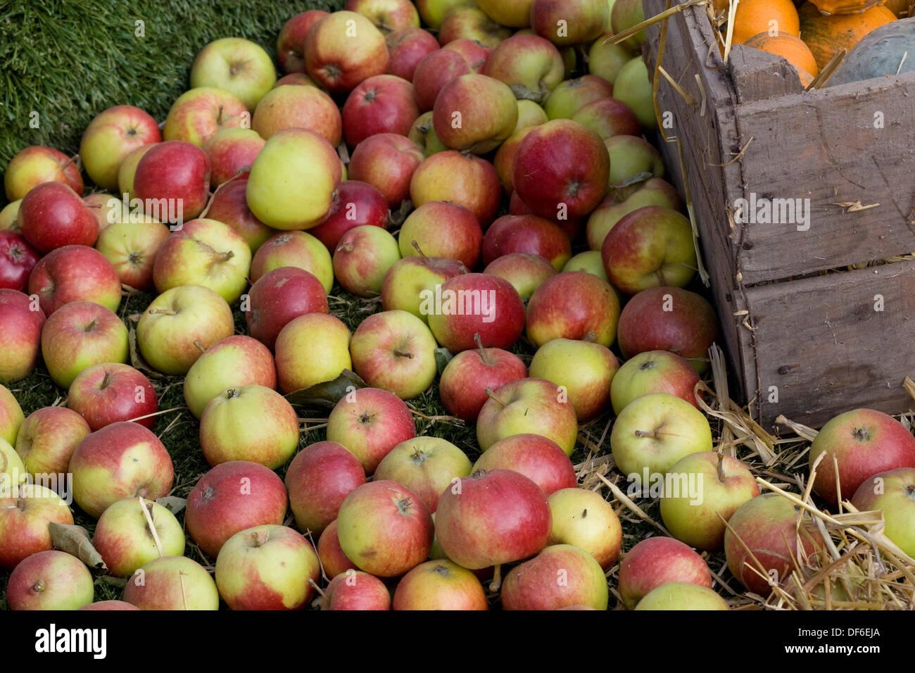 Forbidden Fruit Stock Photos & Forbidden Fruit Stock Images - Alamy