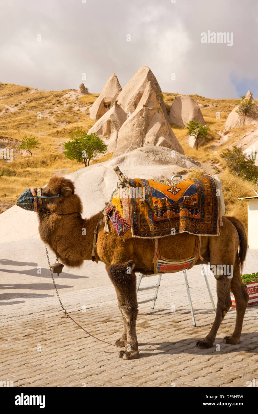 Camel Seat Stock Photos Amp Camel Seat Stock Images Alamy