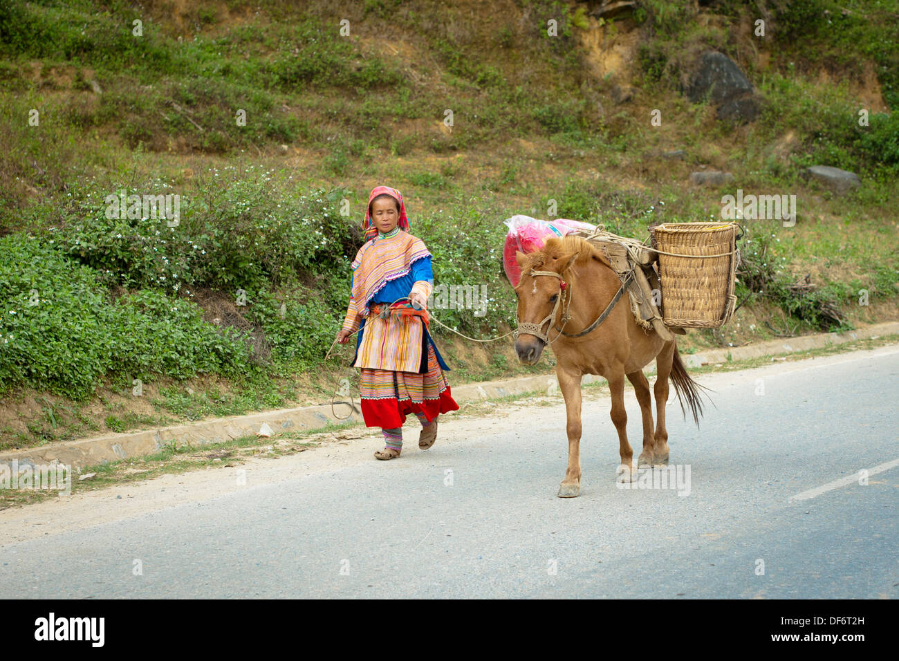 A Flower Hmong woman and her packhorse walk down the street in Bac Ha, Lao Cai Province, Vietnam. - Stock Image