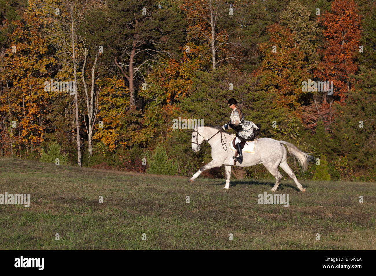Masked woman in  costume riding gray horse in countryside - Stock Image