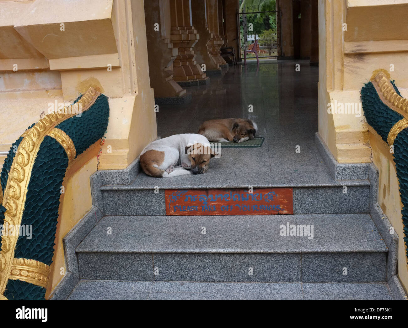 Two dogs sleeping on the steps of a Buddhist temple in Vientiane, Laos - Stock Image