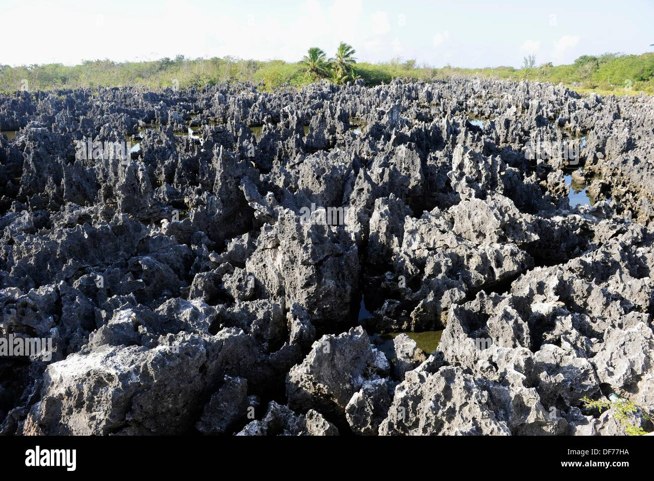 Jagged limestone shore at Hell in Grand Cayman Islands Caribbean - Stock Image