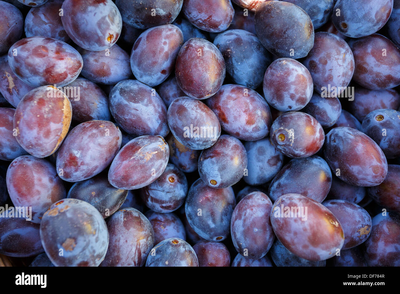 ripe purple and blue Plums (Blackthorns) Background, Texture, detail - Stock Image