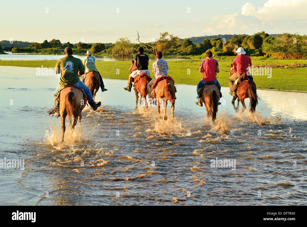 Brazil, Pantanal: Horse gallop with a group of men of Pousada Rio Mutum in Barao de Melgaco - Stock Image