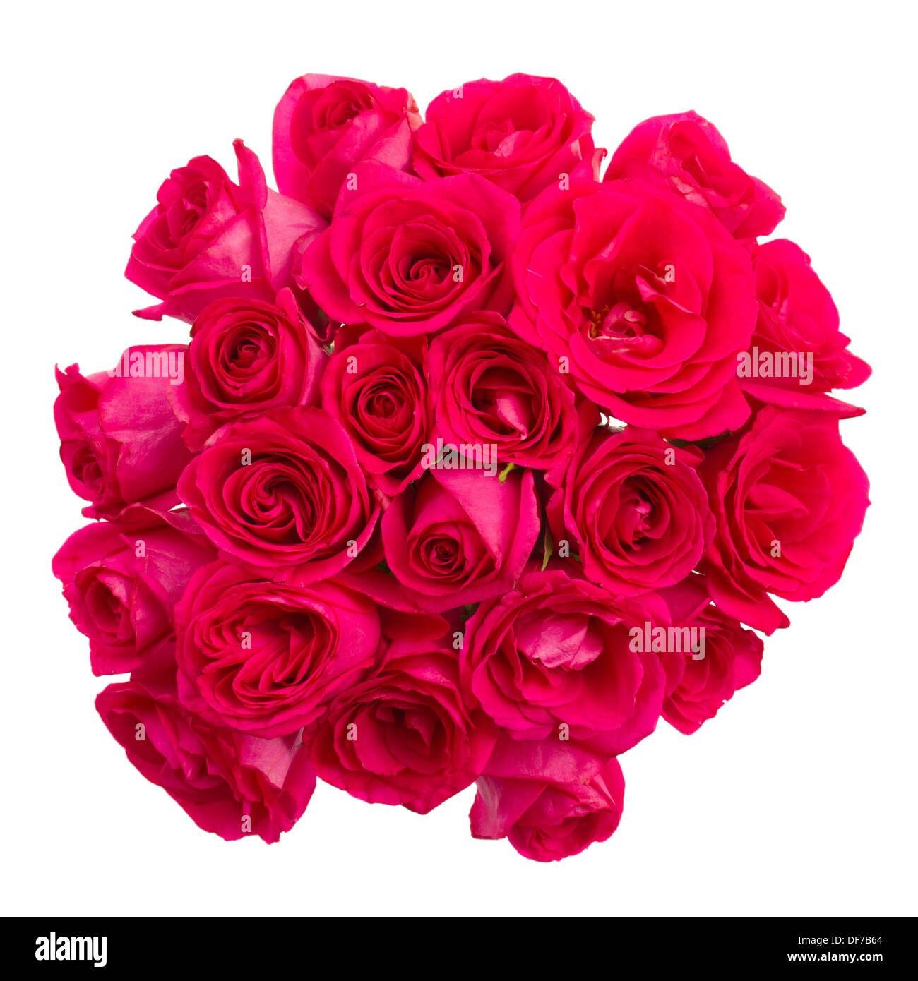 round bouquet of mauve roses - Stock Image