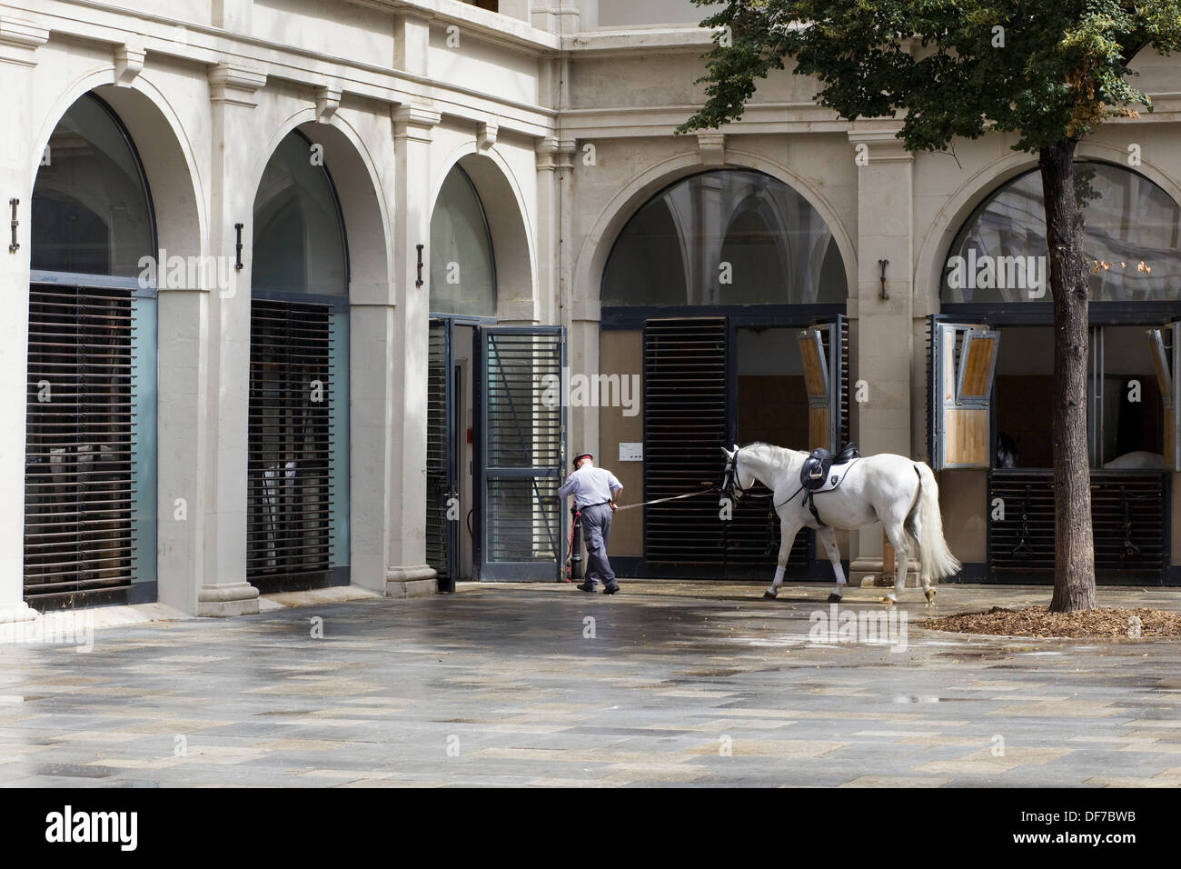 Lipizzans Stallion Returning to stables after training at the Spanish Riding School in Vienna Stock Photo