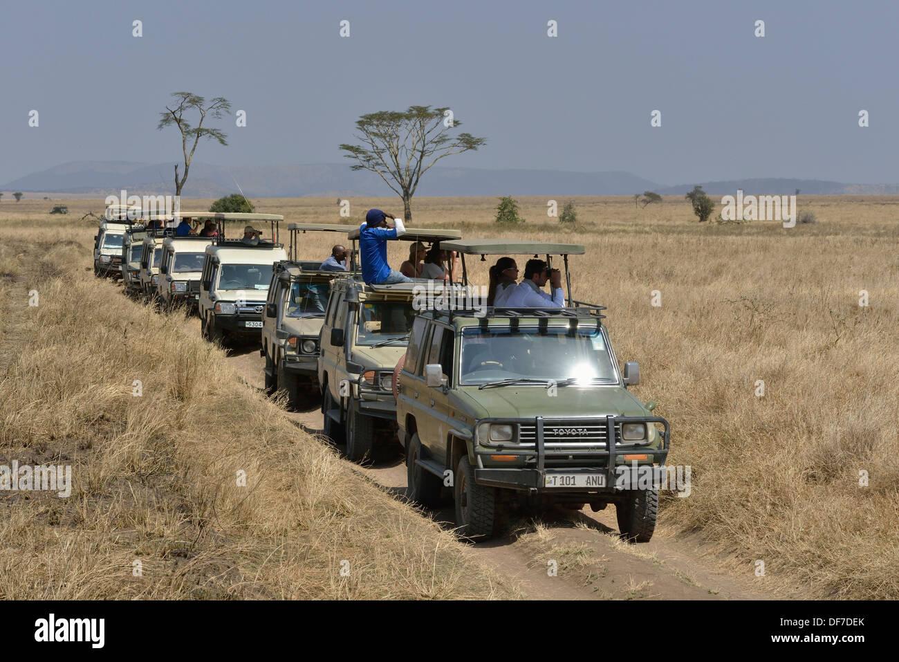 Lined up safari vehicles with tourists, Serengeti National Park, Serengeti, Tanzania - Stock Image
