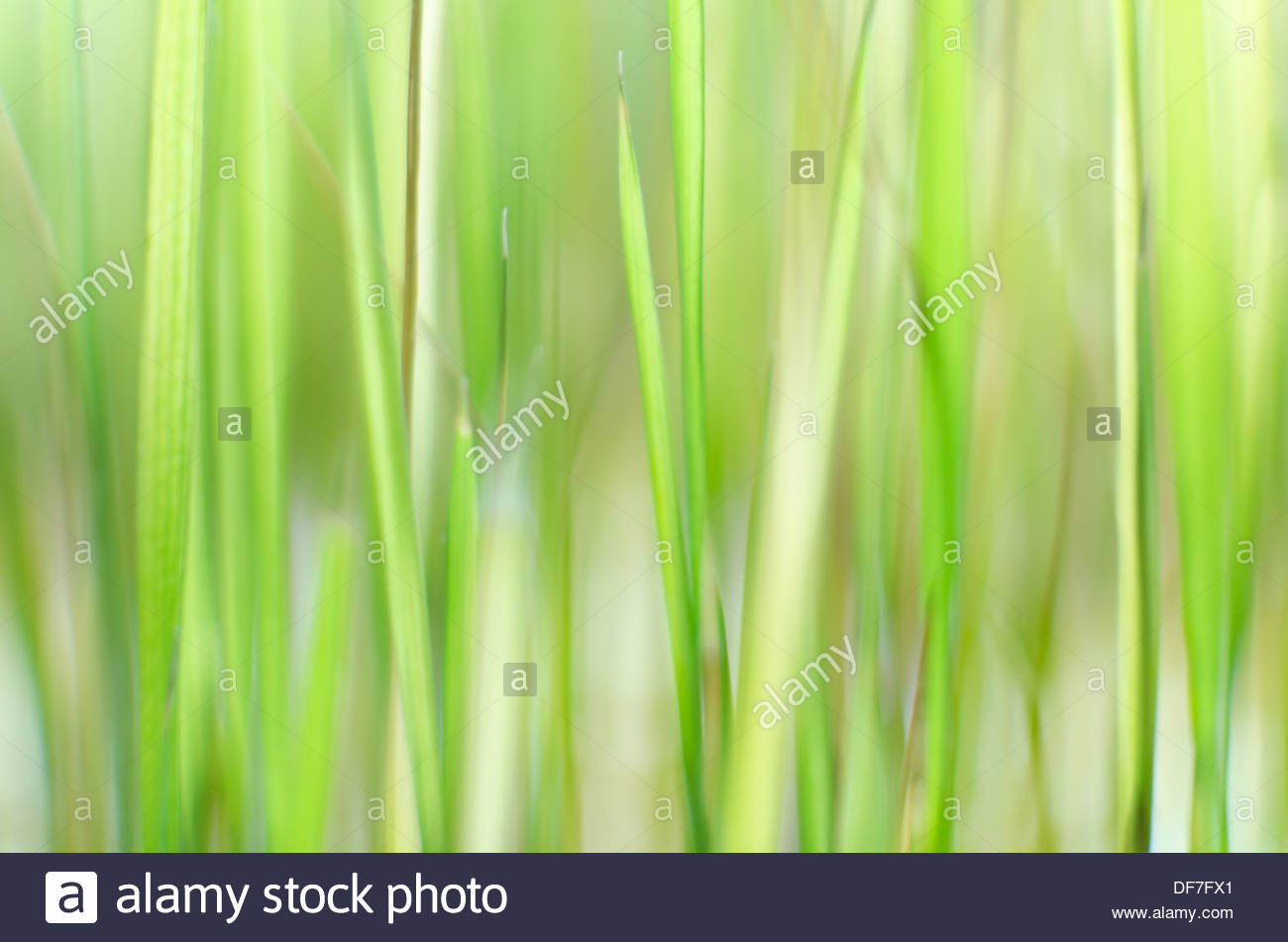 Green grass unfocused background - Stock Image