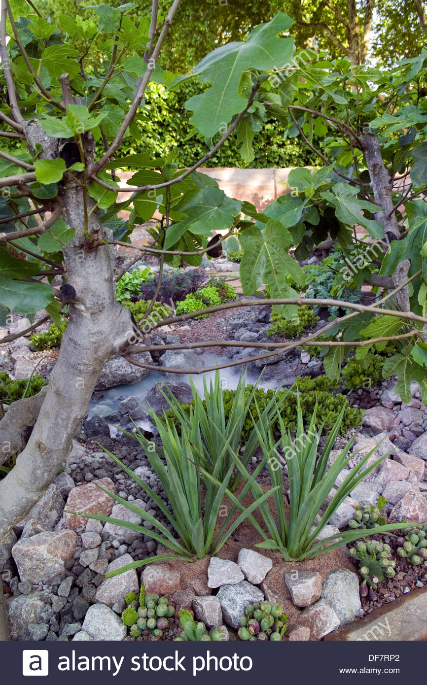 '600 Days with Bradstone' garden at RHS Chelsea Flower Show 2007. Planting includes Ficus carica (fig), Yucca, cacti and lettuce - Stock Image