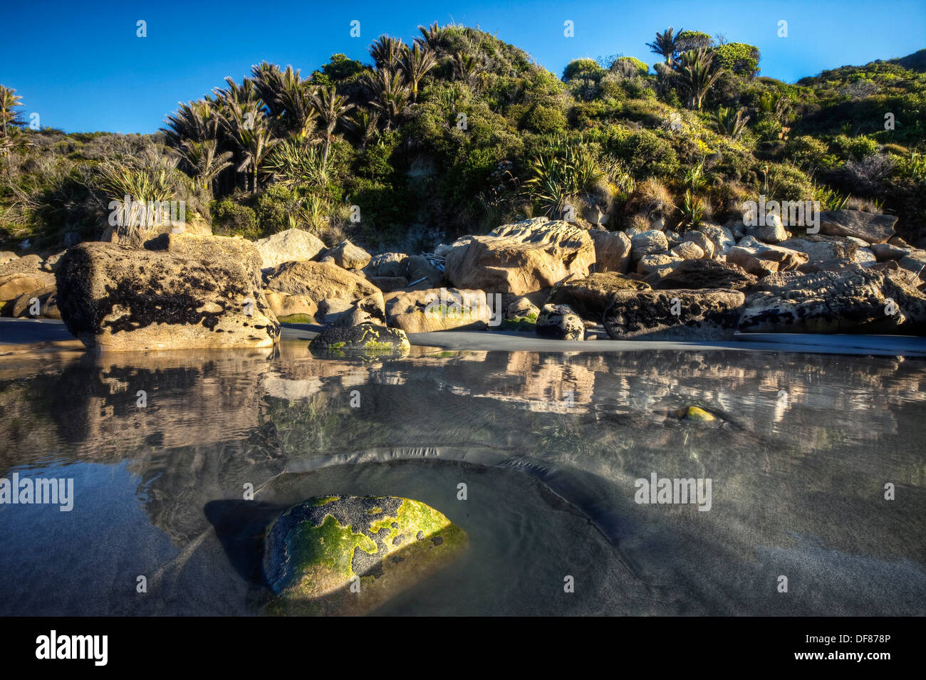 Incoming tide swirls past algae and shell covered rock, nikau palms in coastal bush near Punakaiki, Woodpecker Bay, Paparoa - Stock Image
