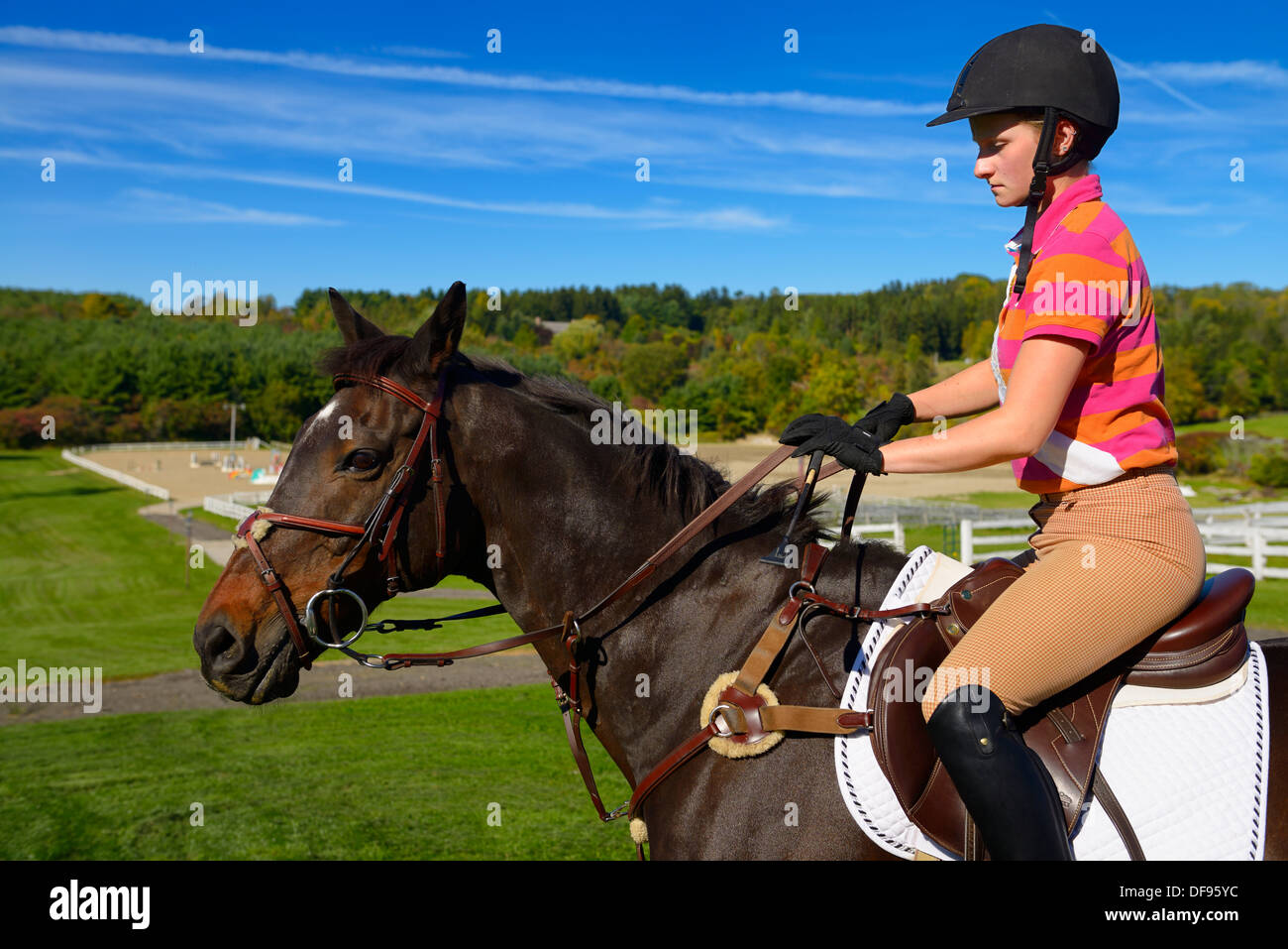 Young female rider mounted on a bay thoroughbred gelding horse going to outdoor training ring Ontario Canada - Stock Image