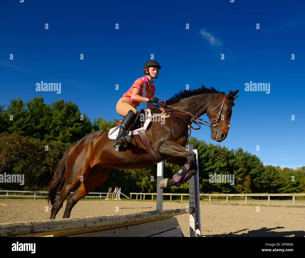 Young Female Rider Jumping An Oxer Hurdle On A Bay Thoroughbred Stock Photo Alamy