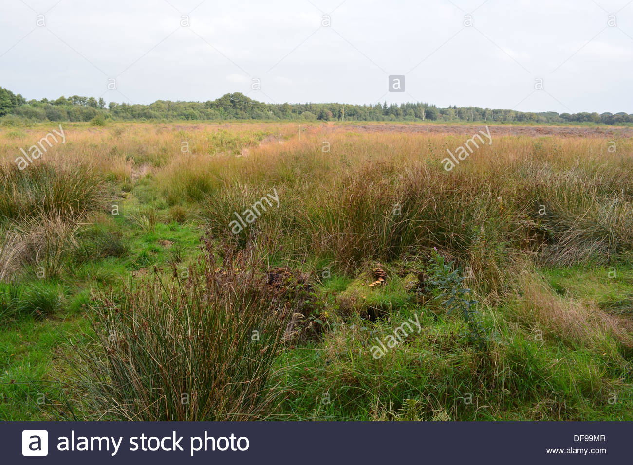 Wem moss national nature reserve. - Stock Image