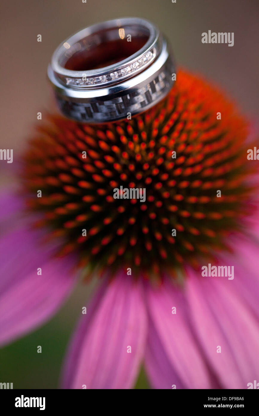 A pair of wedding rings sit atop an eastern purple coneflower. - Stock Image