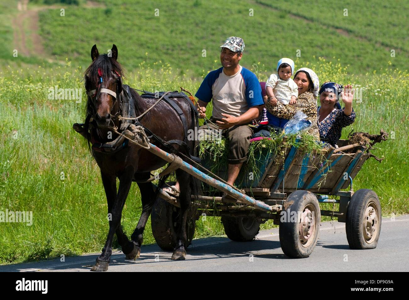 Dobruja, Roma family with traditional horse cart, Romania - Stock Image