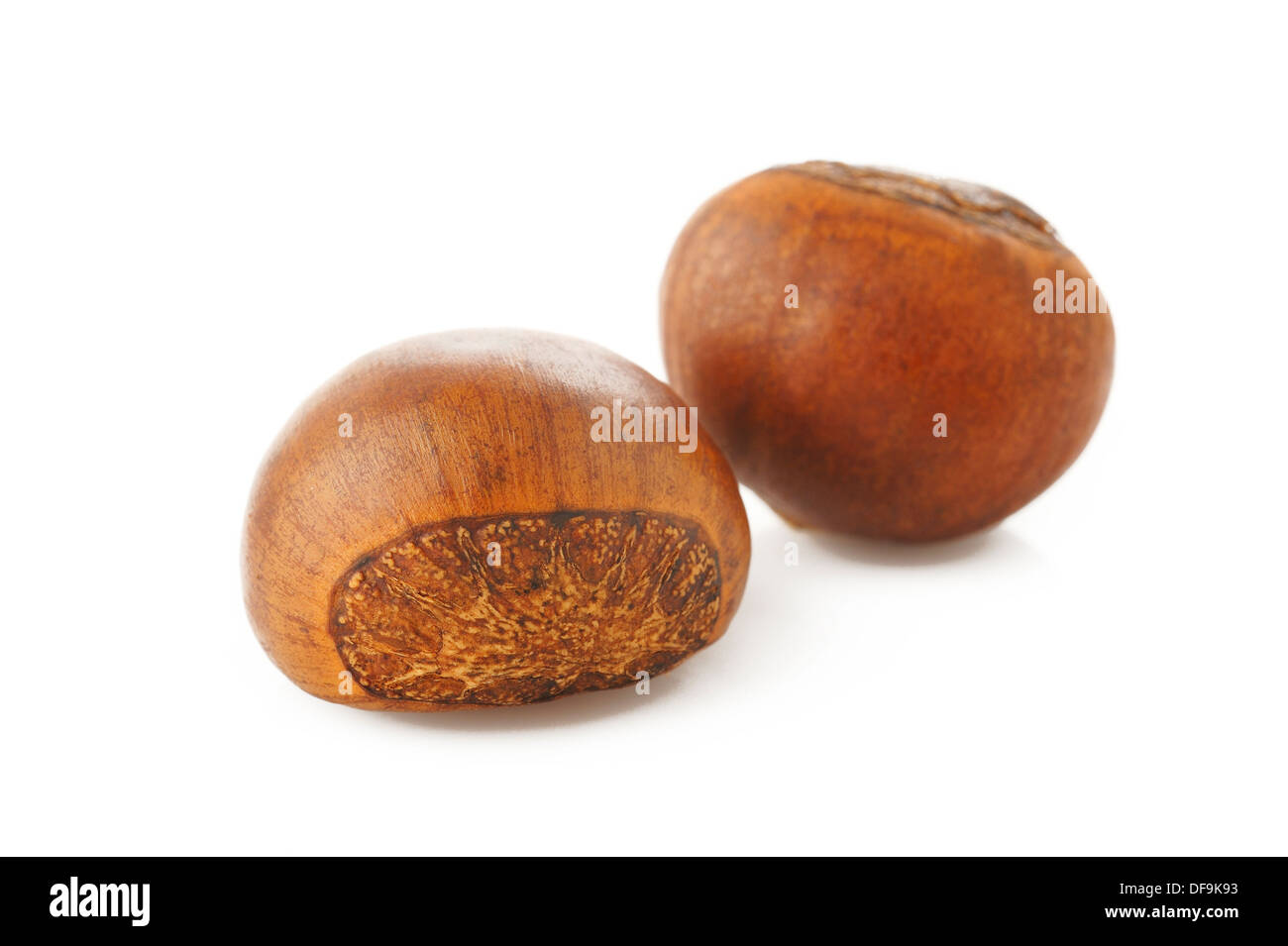 roasted chestnut on white background - Stock Image
