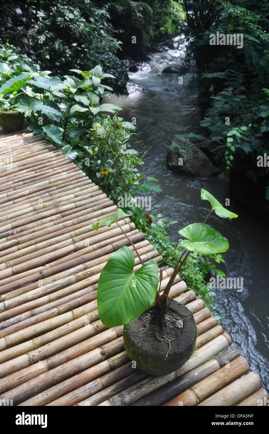near Ubud (Bali, Indonesia): a bamboo bridge over the Ayung river in the Ubud Hanging Gardens Hotel´s garden - Stock Image