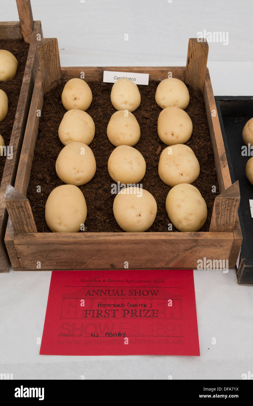Prize winning potatoes at the Gransden Agricultural show - Stock Image