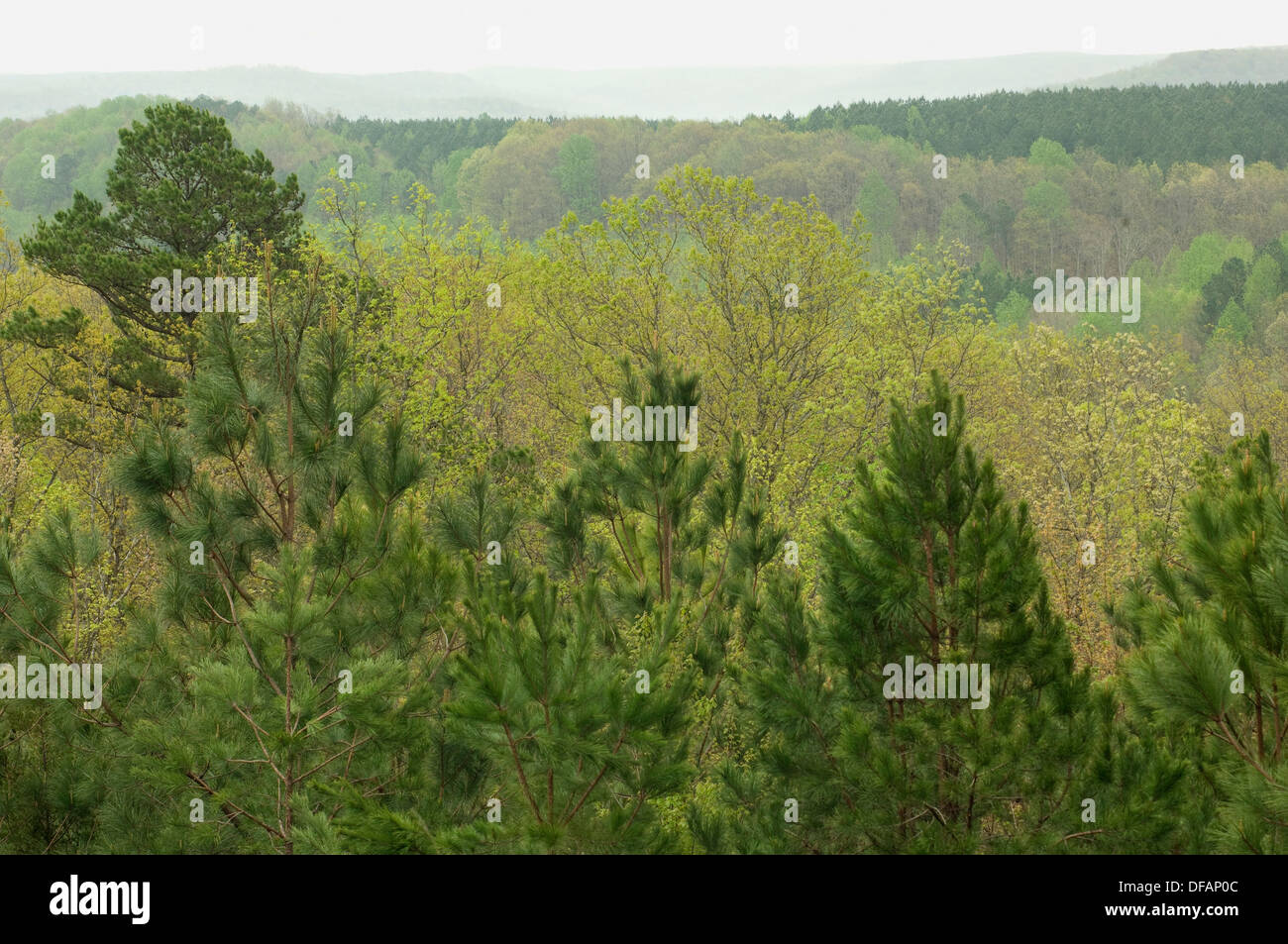 Freedom Hills spring forest, from the Natchez Trace in Alabama. Digital photograph - Stock Image