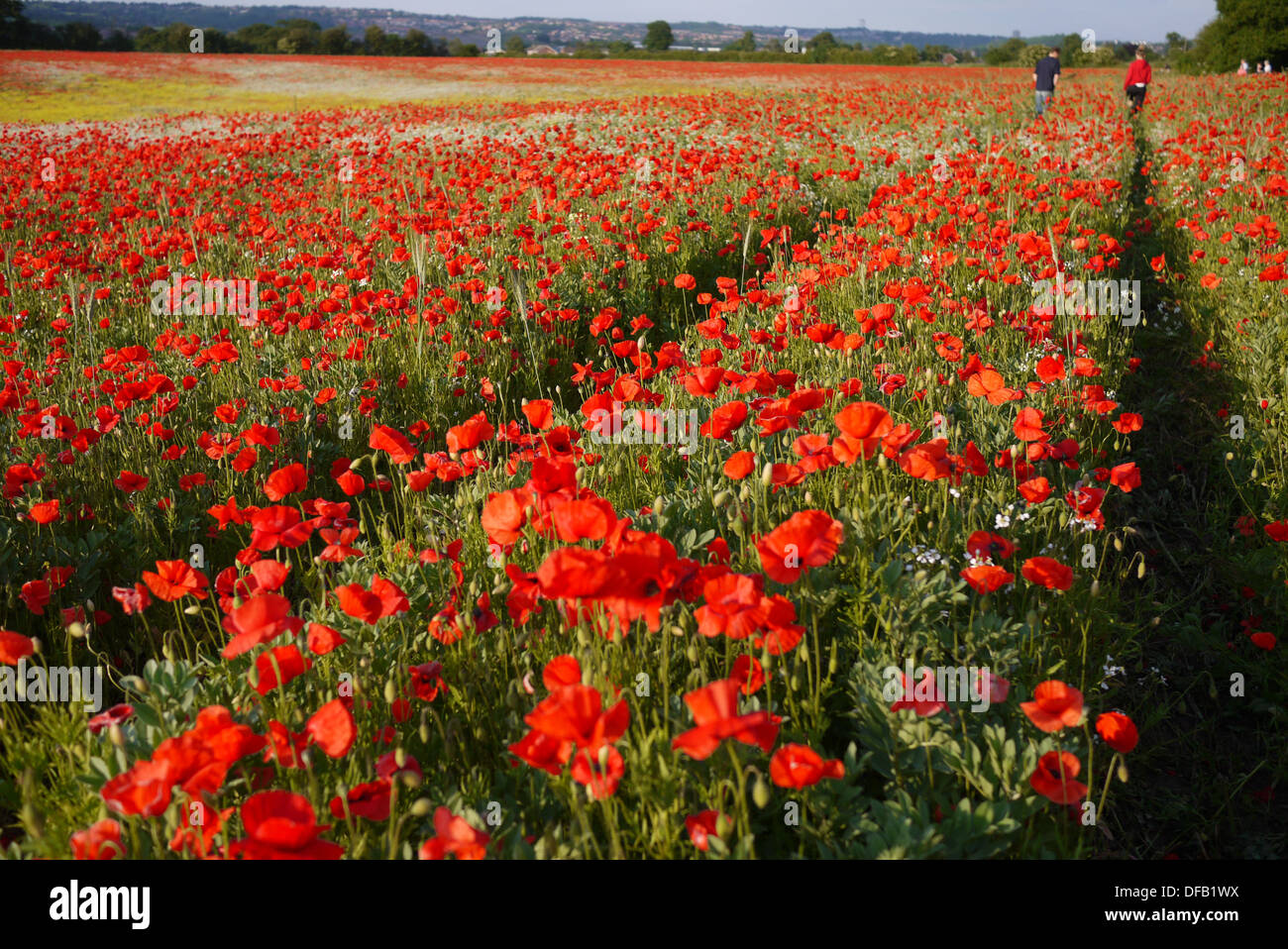 men walking through poppy field - Stock Image