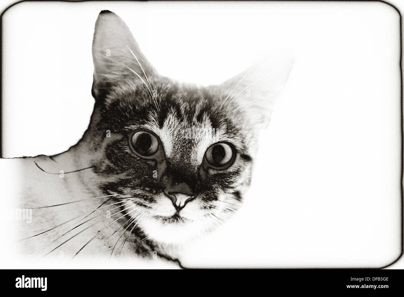 Solarised picture of a cat - Stock Image