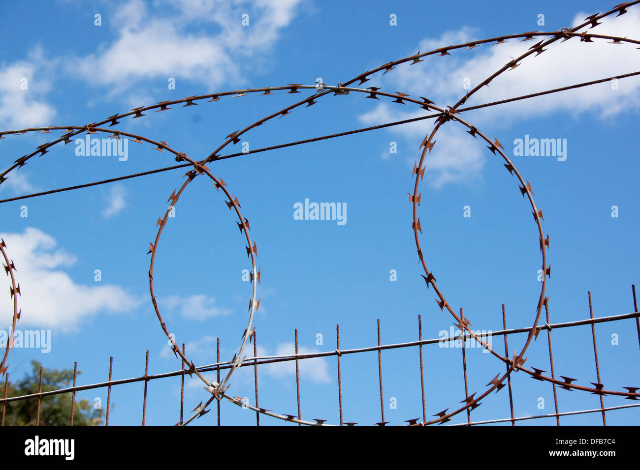 Coiled razor sharp barbed wire on fence against blue sky Stock Photo