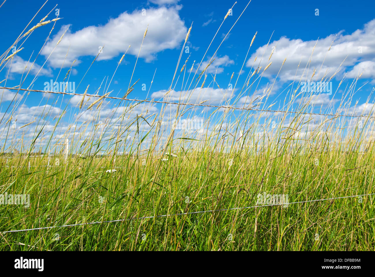 Green field on a farm, under the blue sky with clouds. - Stock Image