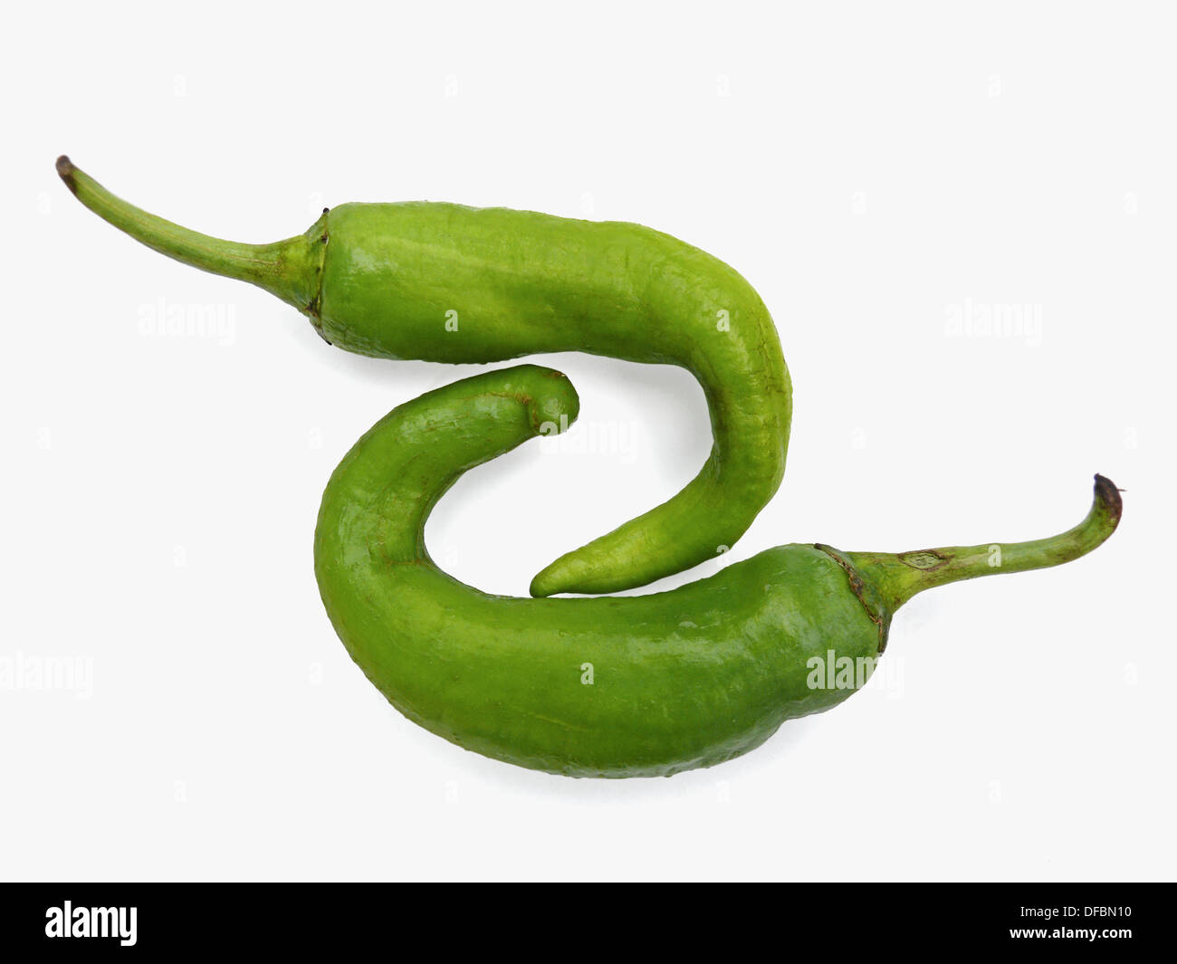 Common green Chilies are linked together. Capsicum annuum. Pune, Maharashtra, India. - Stock Image