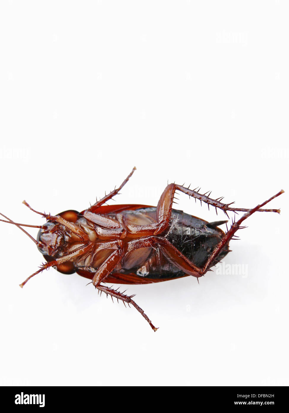 Cockroach. Cockroaches (or simply ´roaches´) are insects of the ...