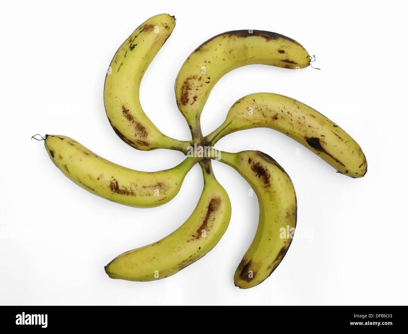 Bananas are arranged in floral pattern  Musa X paradisiaca L  Family: Musaceae  Pune, Maharashtra, India - Stock Image