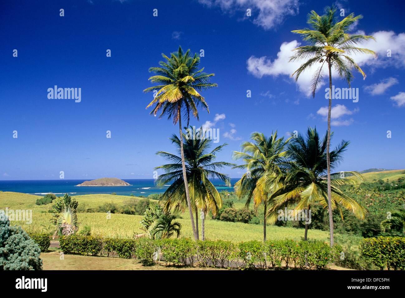 paysage de la cote atlantique entre Sainte-Marie et La Trinite Ile de la Martinique Departement et Region d´Outremer francais - Stock Image